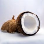 coconut-1125_640