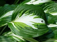 leaf-167286__180