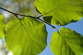 leaf-228052__180